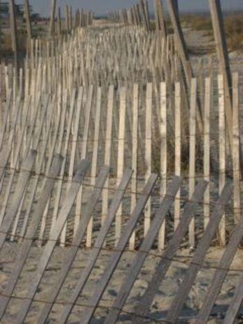 Sand_dune_fence