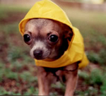 Doggie_raincoat_2
