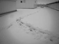 Snowpaths