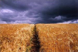 Wheatfield_with_dark_sky